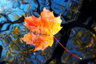 autumn leaf on the water surface