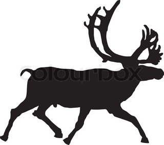 Vector illustration of reindeer on a white background