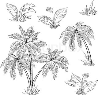 Palm trees, flowers and grass, monochrome contours on white background Vector