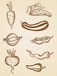 set of hand-drawn vintage vegetable icons
