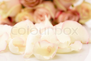 pink roses petals like a background closeup