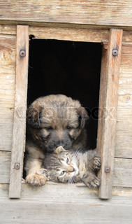 small cat and dog and their nice wooden home