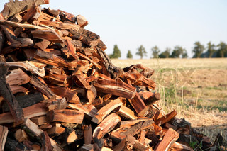Pile of fuel wood in a field