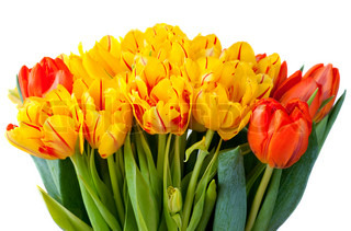 Yellow and red tulips bouquet isolated on white