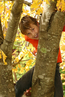 A young boy climbs a deciduous tree, its trunk covered with some moss and lichens during Autumn - 400 iso