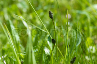 meadow plant detail