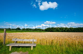 Wooden Bench against the Background of Wheat and Corn Fields in Bavaria, Germany