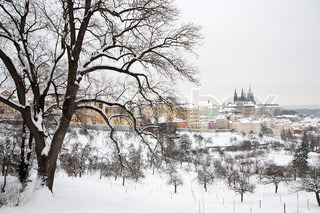 Prague castle in winter - tree in front