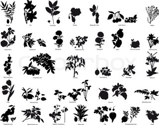 Collection of different vector berries and flowers