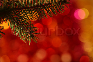 Bough of Christmas tree against blurred light background