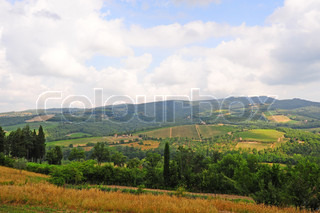 Hills of Tuscany with Vineyards and Olive Plantations in the Chianti Region
