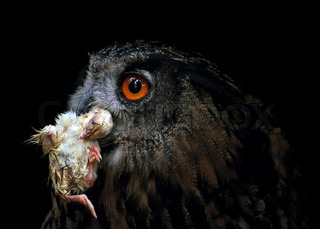 small snack - eagle owl