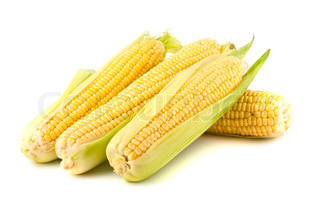 Ripe yellow corn on the cob on a white background