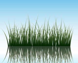 Vector grass silhouettes background with reflection in water All objects are separated