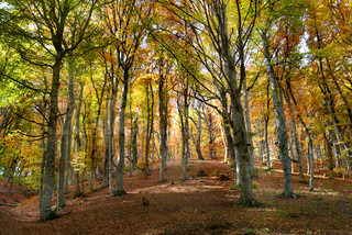 Autumn forest in the warm sunny day