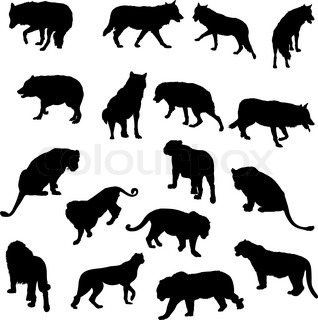 Set of wolves, tigers, leopareds and lions silhouettes Vector illustration