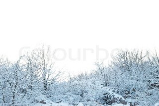 Winter snowy forest background isolated on white