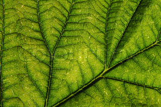 green leaf background as very nice natural background