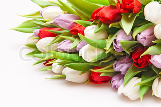 smuk buket tulipaner isoleret på hvidt