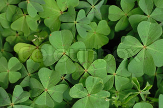 green leaves as very nice natural background