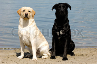 Young and old, white and black dogs
