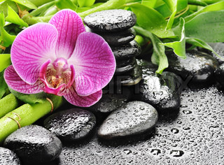 spa concept with zen stones and pink orchid
