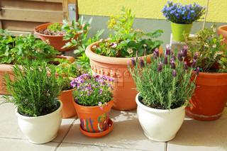 Lille urter og blomsterhave bygget på terrassen eller tag