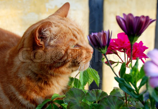 The orange cat and the flowers