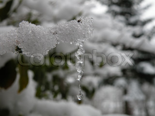 ice tap hanging down a snowy branch