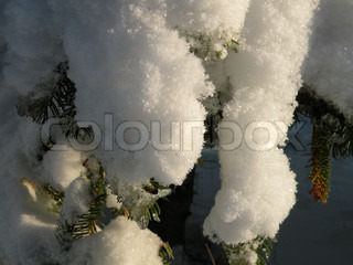 close up of thick lay of snow on branch