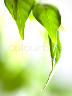 Spring nature background Green leaves
