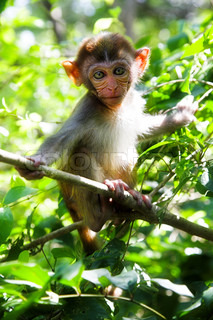 little monkey in the greem tropical forest