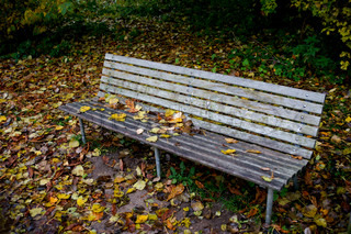 Bench covered with autumn leaves