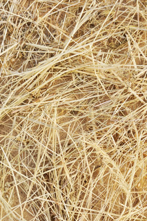 Detail of dry grass hay background