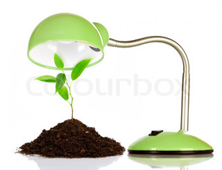 Young sprout and table lamp on a white background