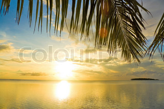 Outdoor Sunset Palm