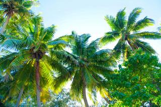 Planter Foliage Palms