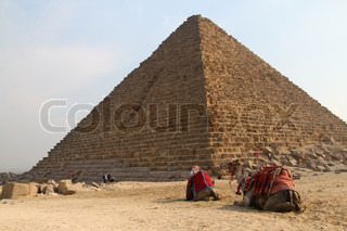 Camels by the Pyramids, Giza, Egypt