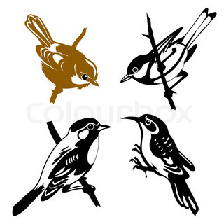 set of the birds on white background
