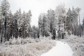 snowy covered landscape with forest raod