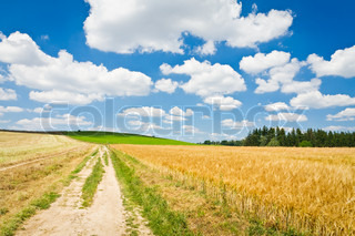 golden wheat field with a road