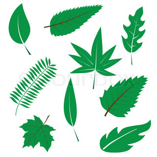 A set of green leaves to the design Vector illustration