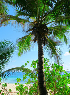 Palms Planter Sky