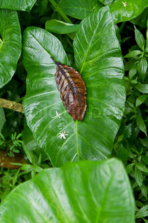 yam plant in tropical rain forest