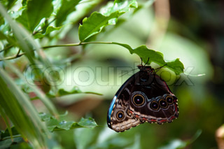 close-up of a beautiful colourful butterfly against plant background