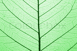 green leaf structure macro as natural background