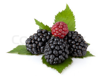 Ripe blackberry with leaves Isolated on a white background