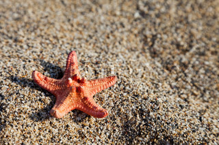 Summer vacations - starfish on sea sand beach