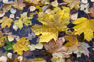 Autumn forest leaves in cold lake water background texture