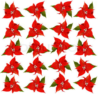 background with red christmas flowers